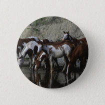 Paint Horses Drinking Pinback Button