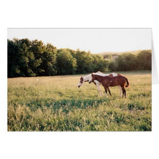 Paint Horses in Pasture Card