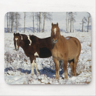 Paint Horses in the Snow Mouse Pad