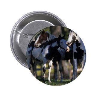 Paint Horses Pinback Button