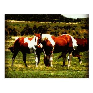 Paint Horses Post Card