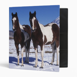 Paint Horses Standing in the Snow Binder