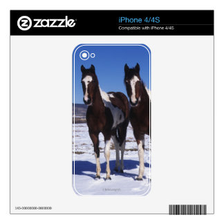Paint Horses Standing in the Snow Skins For iPhone 4S