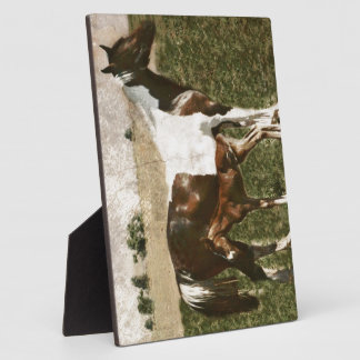 Paint Mare and Foal Display Plaques