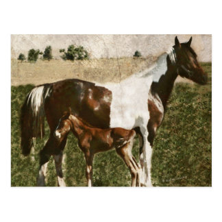 Paint Mare and Foal Post Cards