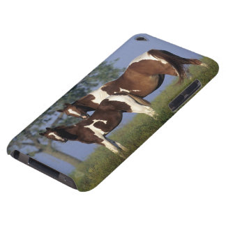 Paint Mare & Foal Barely There iPod Case
