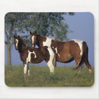 Paint Mare & Foal Mouse Pad