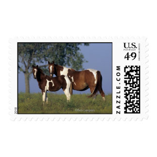 Paint Mare & Foal Stamp