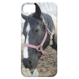 Paint Pinto Horse iPhone 5 Cases