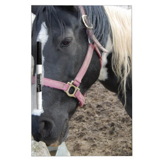 Paint Pinto Horse Dry-Erase Board