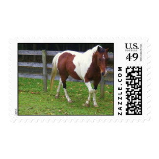 Paint Pinto Horse in Pasture Postage Stamp