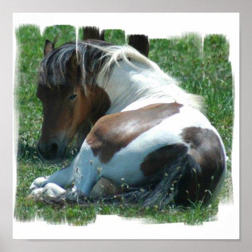 Paint Pony Canvas Print