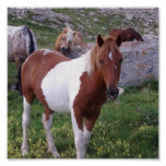 Paint Pony Poster Print