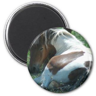 Paint Pony Resting Magnet Refrigerator Magnets