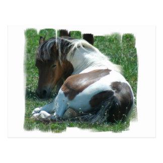 Paint Pony Resting Postcard