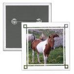 Paint Pony Square Pin
