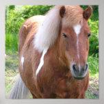 Paint Quarter Horse Print