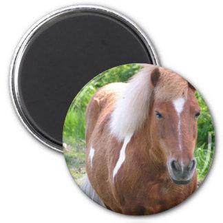 Paint Quarterhorse Magnet