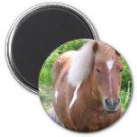 Paint Quarterhorse Magnet Refrigerator Magnet