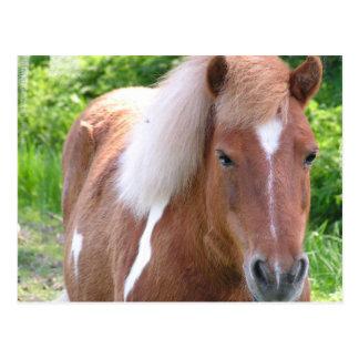 Paint Quarterhorse Postcard