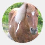 Paint Quarterhorse Sticker