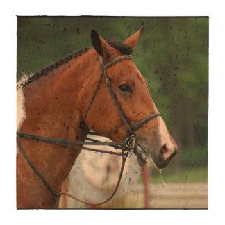 Paint Show Horse Beverage Coasters