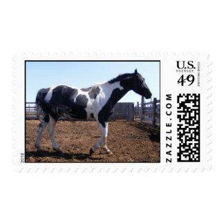 Paint Stallion Postage Stamp
