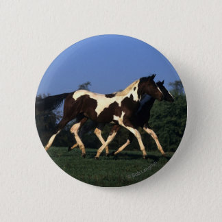 Paint Yearlings Running Button