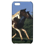 Paint Yearlings Running iPhone 5C Covers