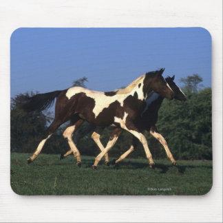 Paint Yearlings Running Mouse Pad