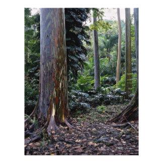 Painted bark eucalyptus, Maui, Hawaii Flyer