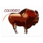 painted bison Colorado postcard