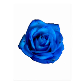Painted Blue Rose With Rain Postcard