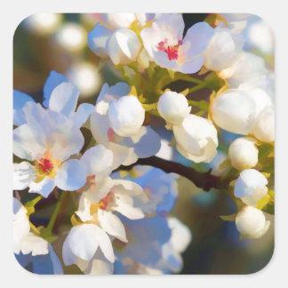 Painted Bradford Calleryana Pear Tree Blossoms Square Sticker