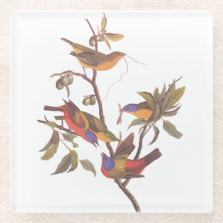 Painted Bunting Audubon Birds in Wild Fruit Tree Glass Coaster