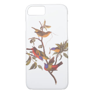 Painted Bunting Audubon Birds in Wild Fruit Tree iPhone 8/7 Case