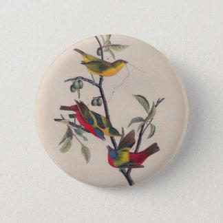 Painted Bunting Audubon Prints Button
