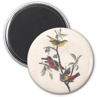 Painted Bunting Audubon Prints Magnet