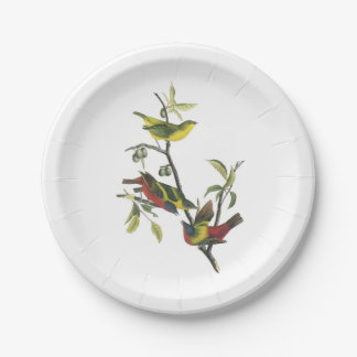 Painted Bunting by Audubon Paper Plate