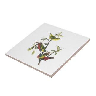 Painted Bunting by Audubon Tile