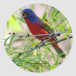 Painted Bunting By Kay Mil... Round Stickers