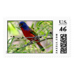 PAINTED BUNTING,  Kay Miller 2007 Stamps