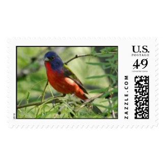 Painted Bunting - Llano - 2004 Postage Stamp
