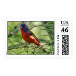 Painted Bunting - Llano - 2004 Postage Stamps