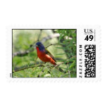 Painted Bunting - Llano Stamp