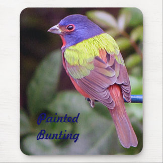 Painted bunting, male mouse pad