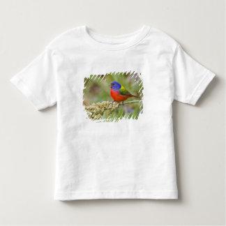 Painted Bunting (Passerian ciris) male feeding Shirt