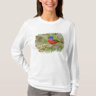 Painted Bunting (Passerian ciris) male feeding T-Shirt