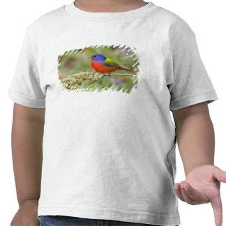 Painted Bunting (Passerian ciris) male feeding T Shirt