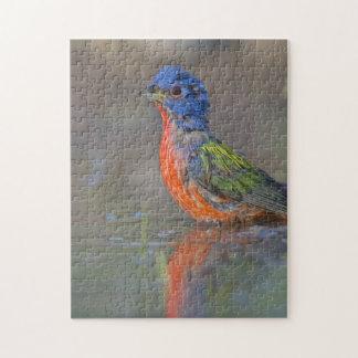 Painted Bunting (Passerina ciris) Bird Photography Puzzle
